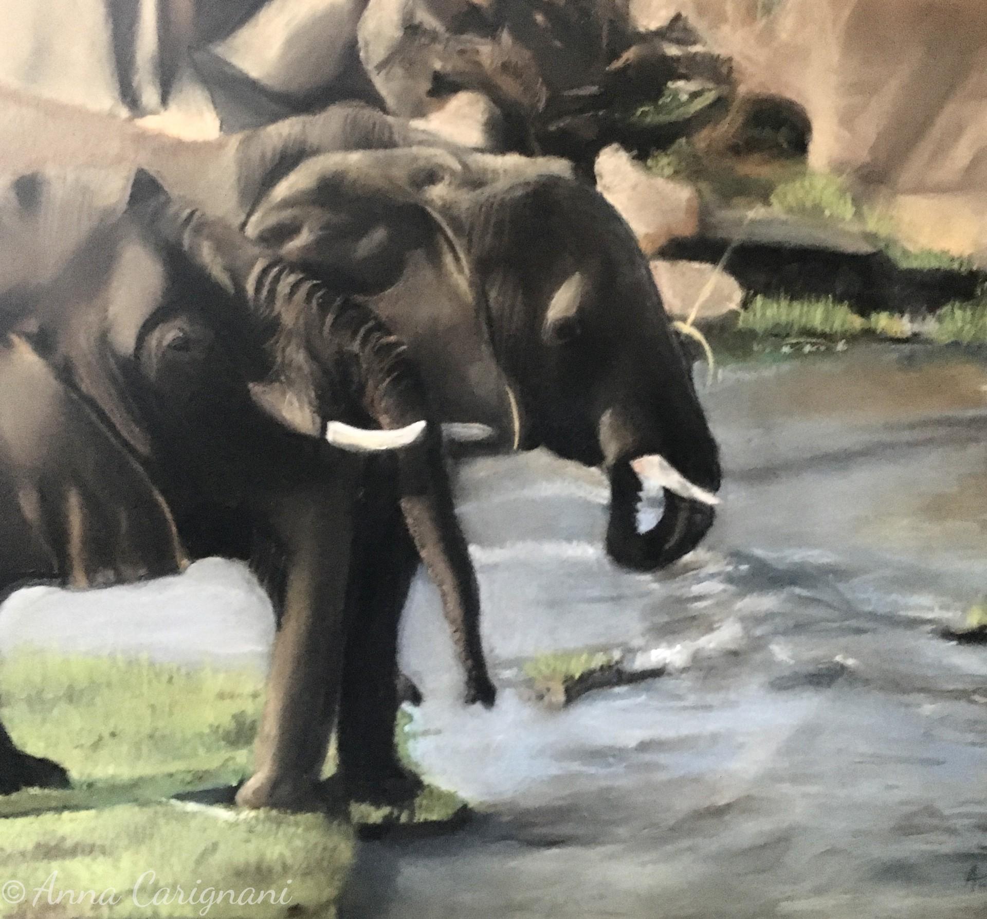 Elefanti della Tanzania